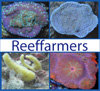 Reeffarmers logo